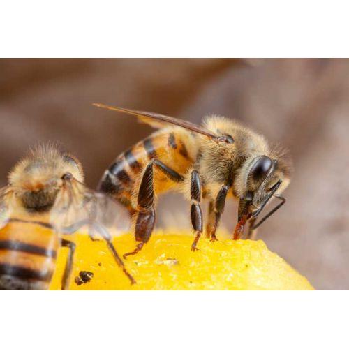 Somos amantes de las abejas