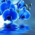 44 Meditación Anexa Ejercicios Pleyadianos : Capullo de sanación cualidades divinas