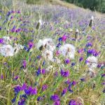 Meditación Limpieza Energética con Flores