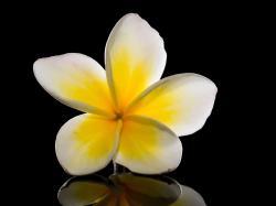 38 Meditación Ejercicios Pleyadianos Número 23: Cámara de Amor - Ying y Yang