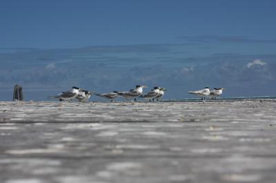 Viaje Vuelta al Mundo: Al agua...Saltimbanquis.