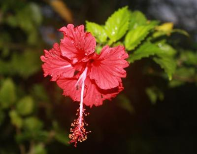 Viaje Vuelta al Mundo: El jardín de la Polinesia.