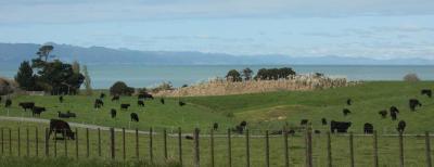 Viaje Vuelta al Mundo: Parques Nacionales de NZ.