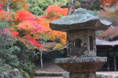 Viaje Vuelta al Mundo: Más Otoño en Miyajima.