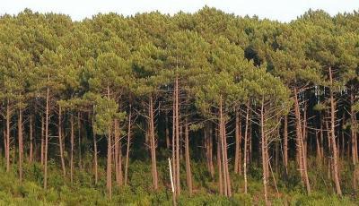 ¿Puede la naturaleza curar los acúfenos?