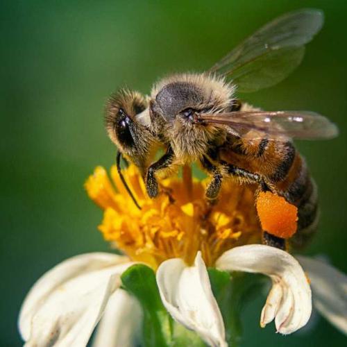 Y colaboraremos a que otras especies, entre ellas nuestras queridas amigas las abejas, perpetuen el círculo de la vida.