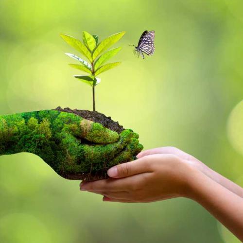 Cuidando y protegiendo todos los tesoros que la Naturaleza nos regala, la tierra, la flora, la fauna, el agua, ...