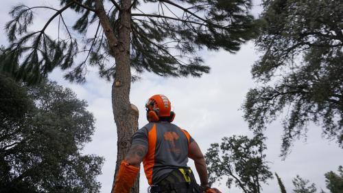 Trabajos de poda en altura en Torrelaguna