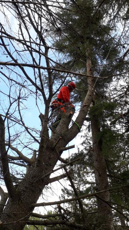 Tala árbol sobre otro sano