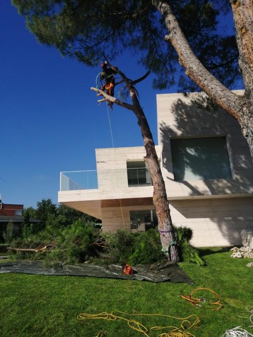 Talas en viviendas ecológicas
