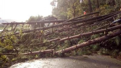 Un tornado en Arteixo provoca la caída de diversos árboles y cables del alumbrado público