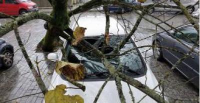 Árboles arrancados, muros caídos y otras 100 incidencias: la factura de