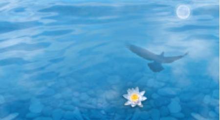 """Vídeo: """"Meditación Compasión por el mundo y todos los seres"""""""