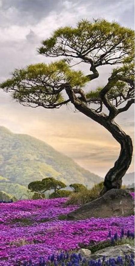 Vídeo Meditación Mi Poder Personal