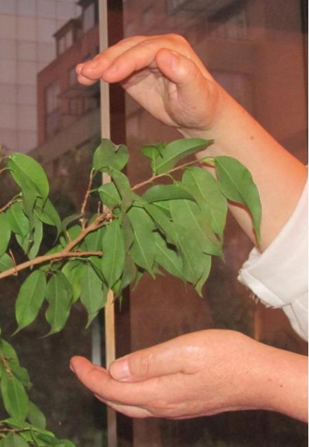 Reiki para plantas